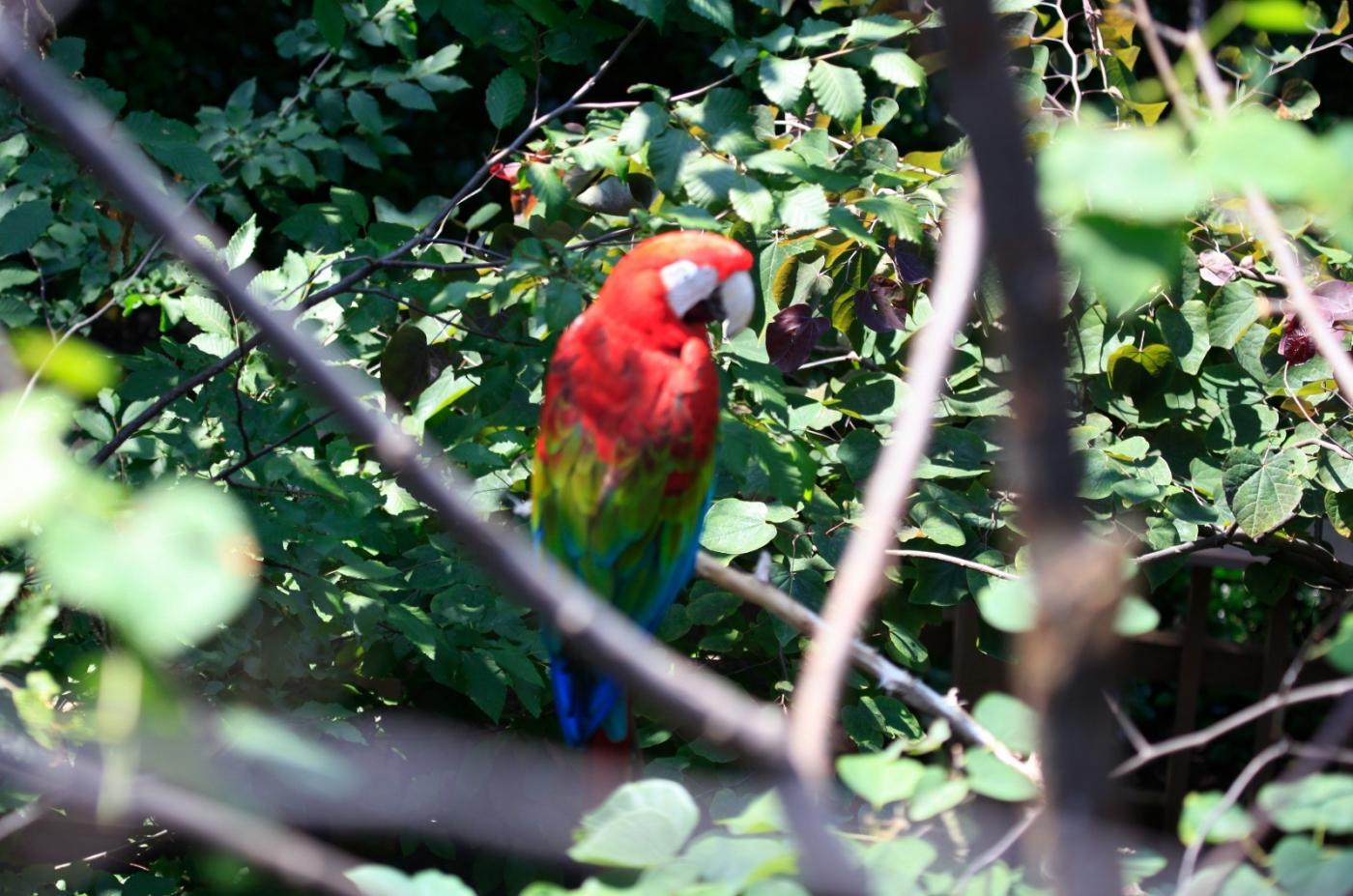 动物园花絮(摄于布朗士动物园,皇后区动物园)_图1-17
