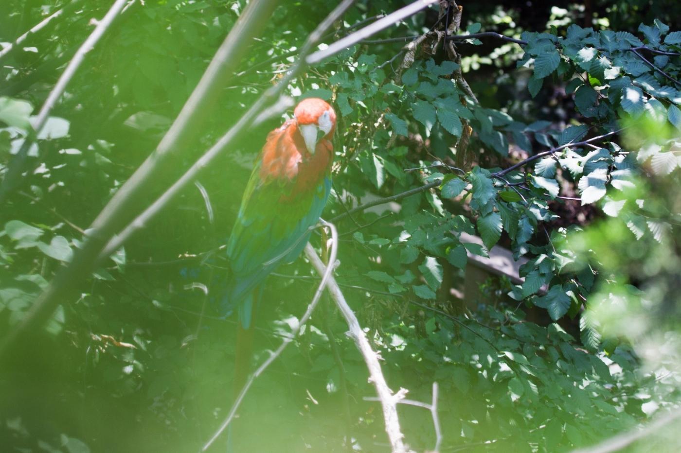 动物园花絮(摄于布朗士动物园,皇后区动物园)_图1-19