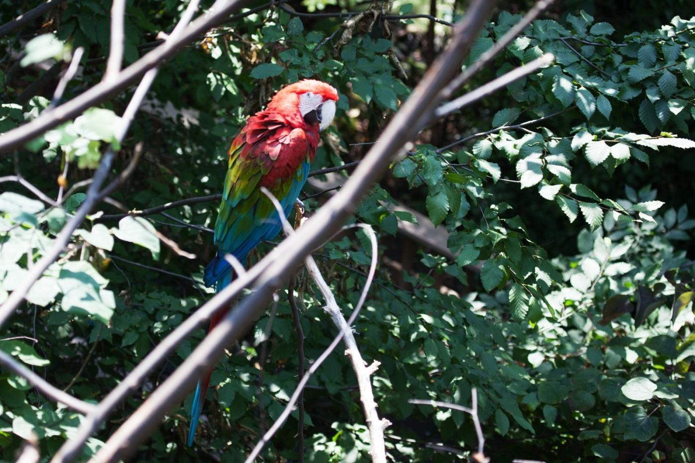 动物园花絮(摄于布朗士动物园,皇后区动物园)_图1-18