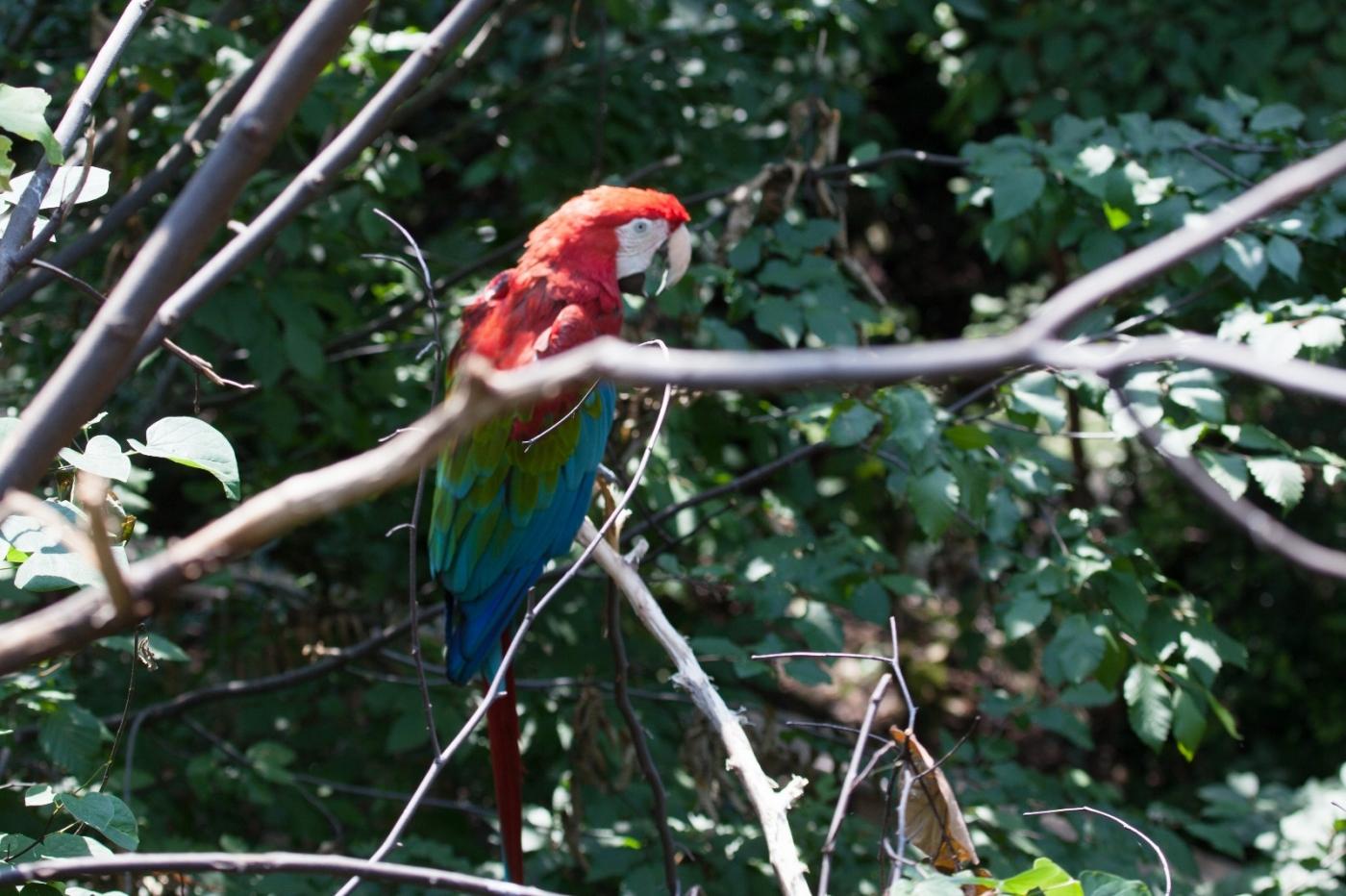 动物园花絮(摄于布朗士动物园,皇后区动物园)_图1-20