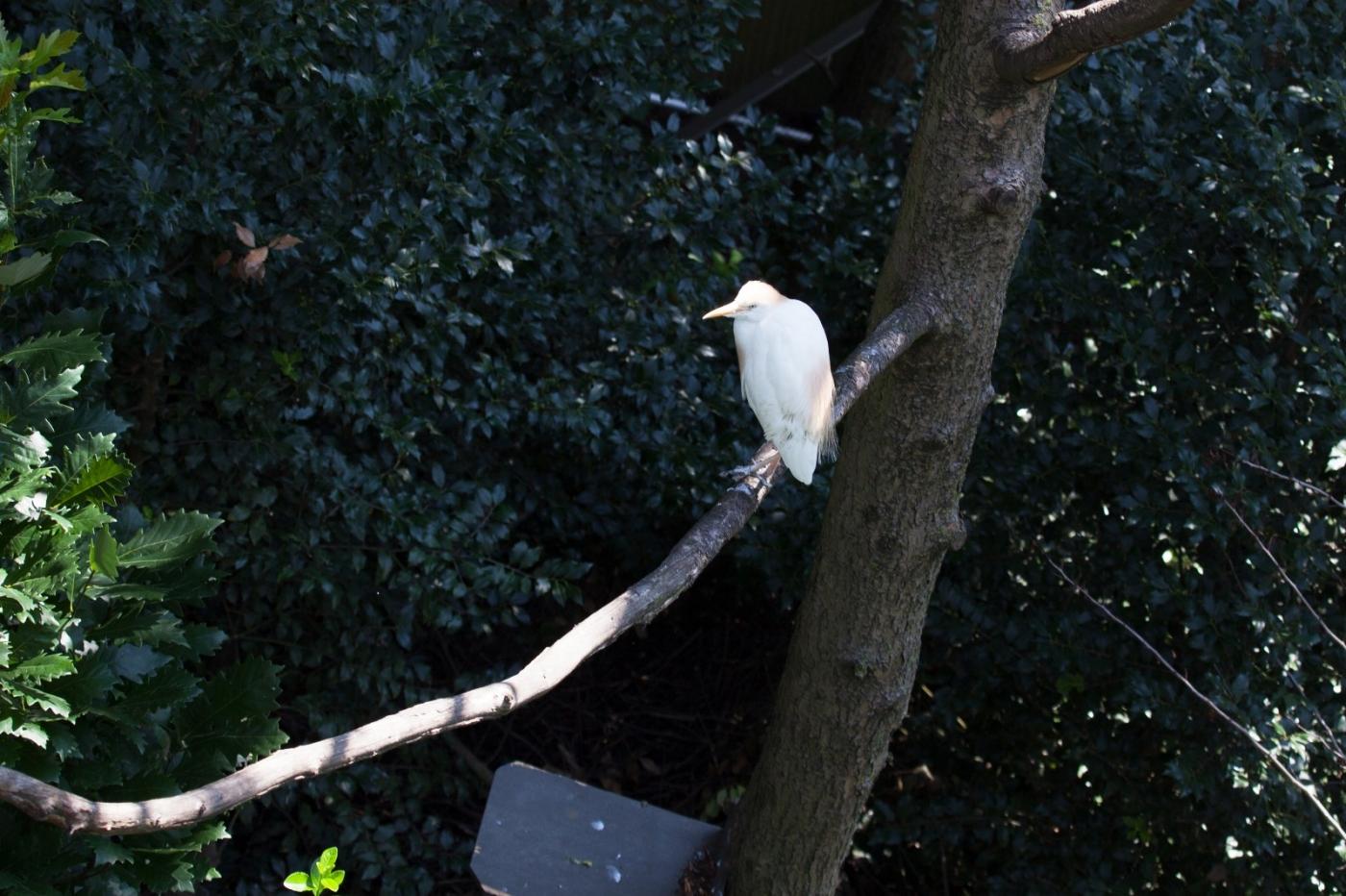 动物园花絮(摄于布朗士动物园,皇后区动物园)_图1-22