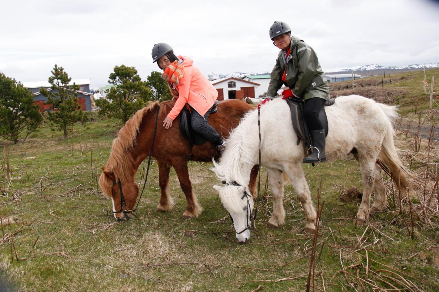 游冰岛马场,策马扬鞭....._图1-16