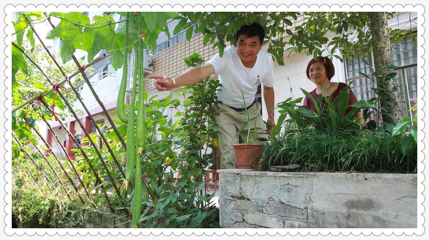 自家种的丝瓜有2.4米_图1-4