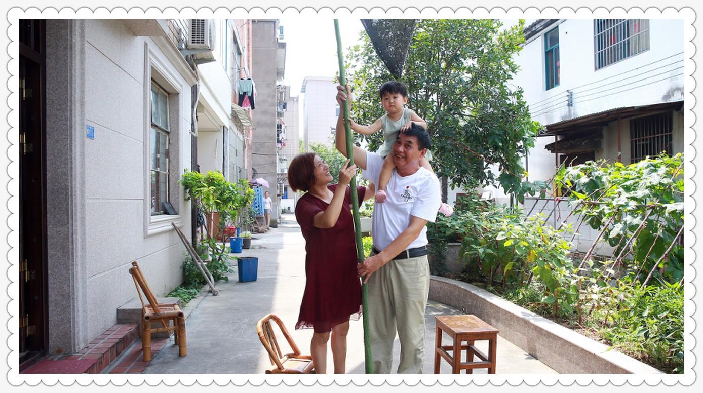 自家种的丝瓜有2.4米_图1-5