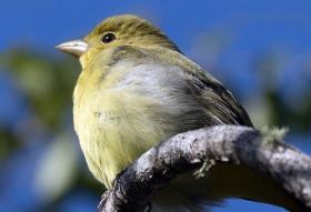 萨尼贝尔保护区---小鸟的天堂
