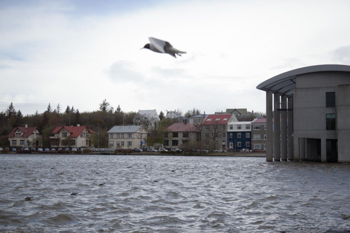 冰岛湖边美景_图1-5