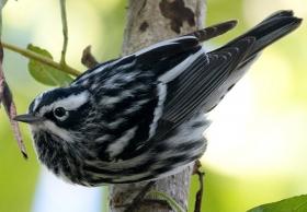 萨尼贝尔保护区---小鸟天堂2