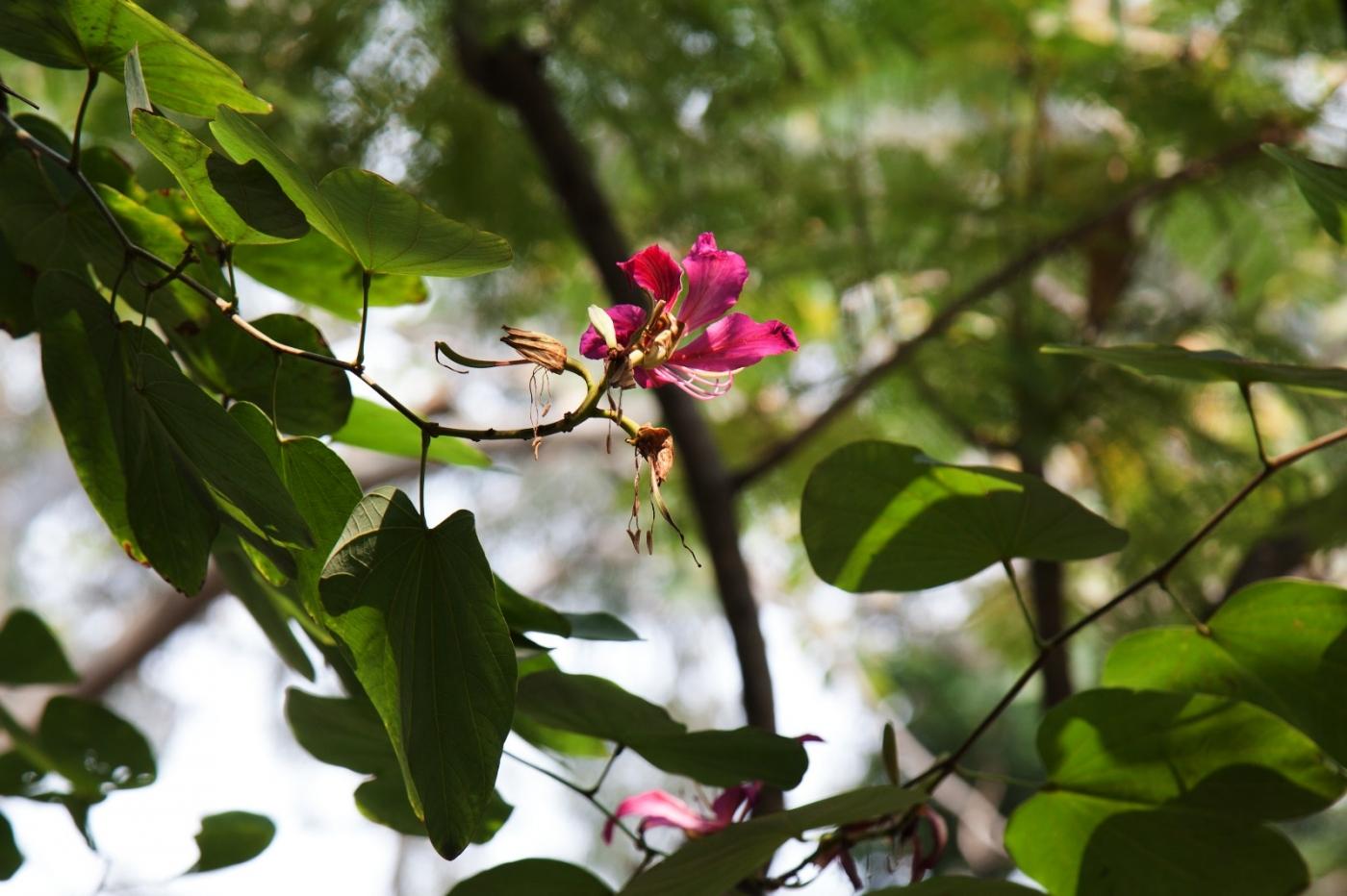 福州西湖公园,美景如画,赏心悦目,流连忘返_图1-21