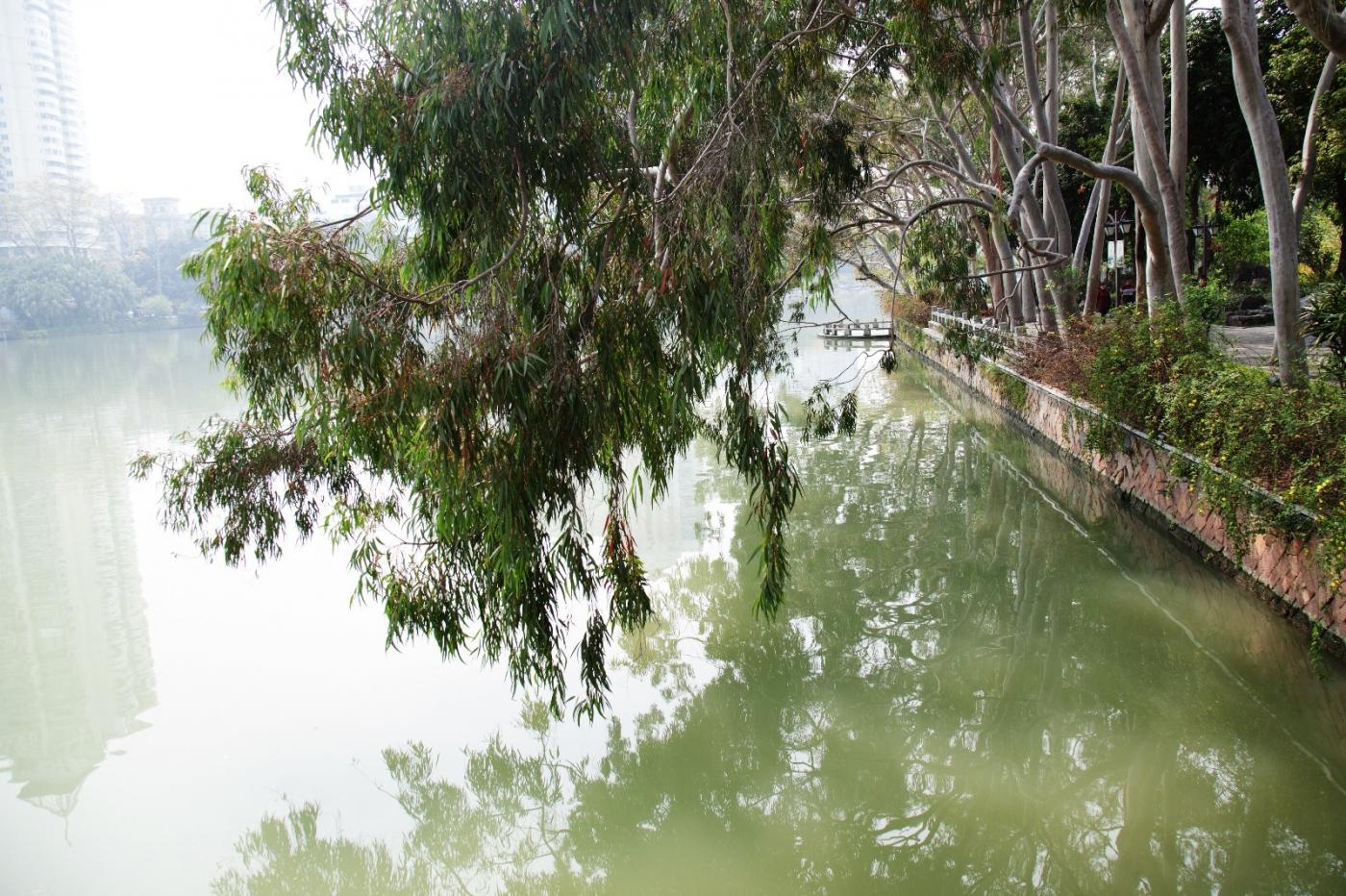 福州西湖公园,美景如画,赏心悦目,流连忘返_图1-24