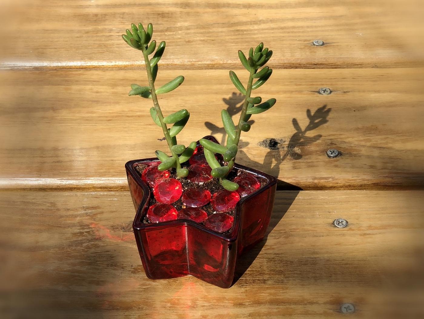 【田螺随拍】分享我做的一美元多肉植物盆_图1-5