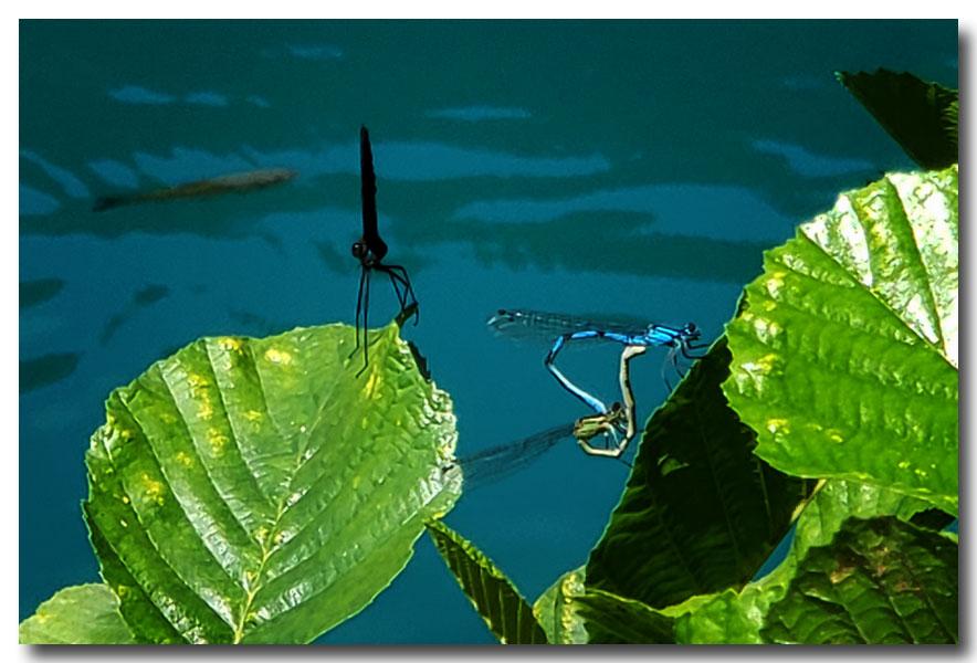 《酒一船摄影》:克罗地亚十六湖印像_图1-29