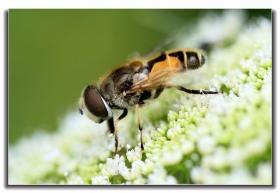 微距拍花与虫