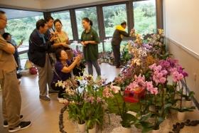 台湾兰花展览会(在皇后区植物园举行)