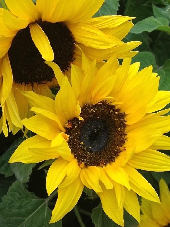 【晓鸣摄影】花卉植物49作展+独创简诗对照谱_图1-1