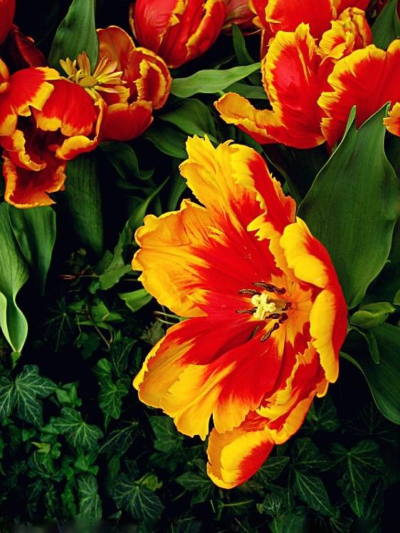 【晓鸣摄影】花卉植物49作展+独创简诗对照谱_图1-3