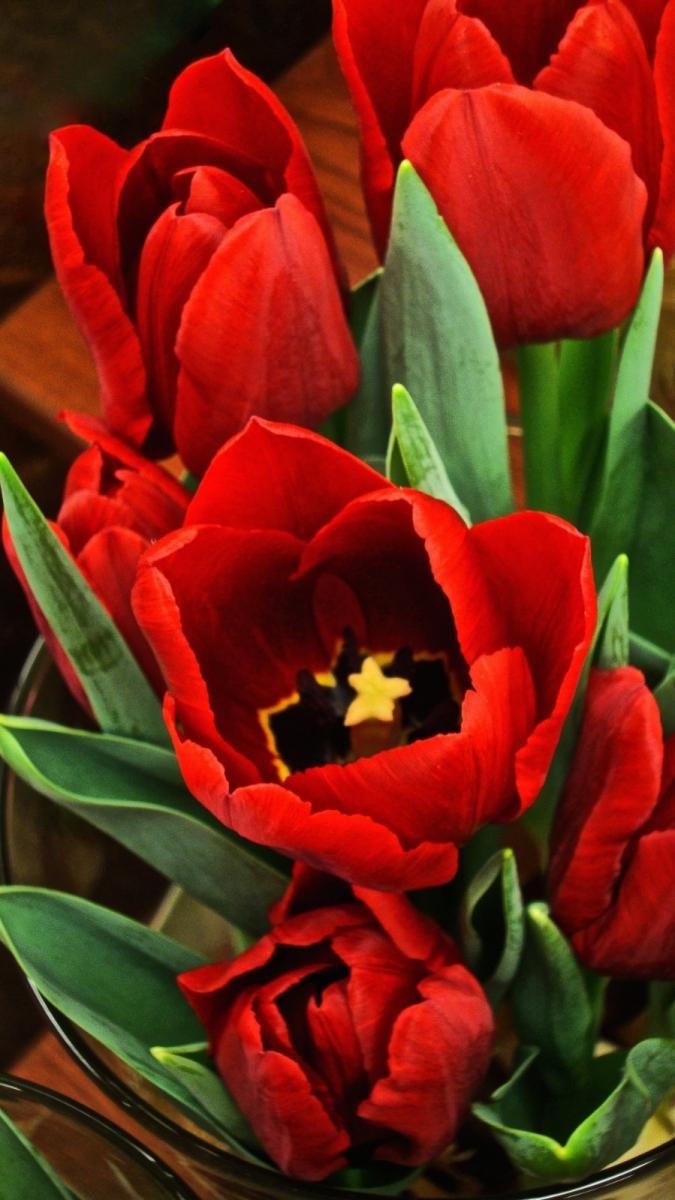 【晓鸣摄影】花卉植物49作展+独创简诗对照谱_图1-4