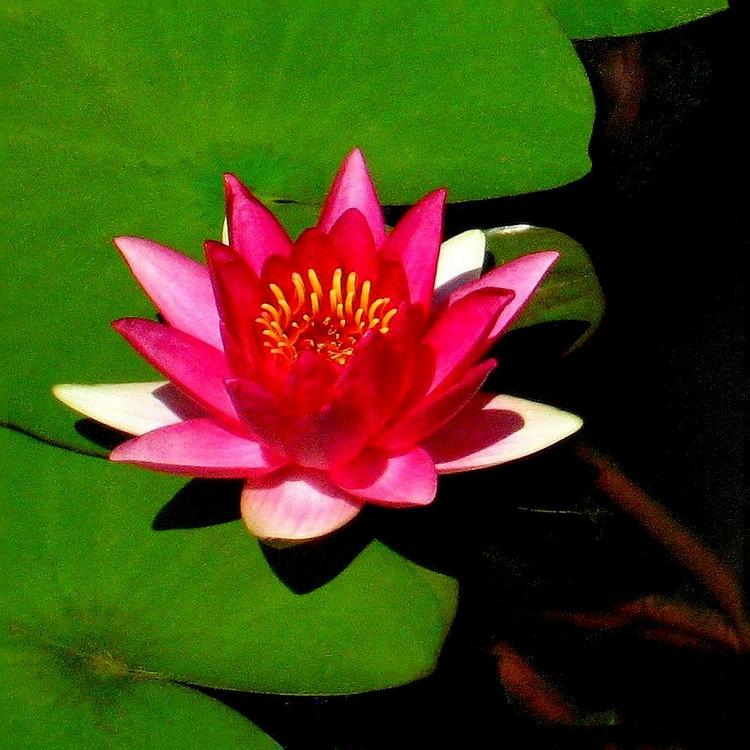【晓鸣摄影】花卉植物49作展+独创简诗对照谱_图1-7