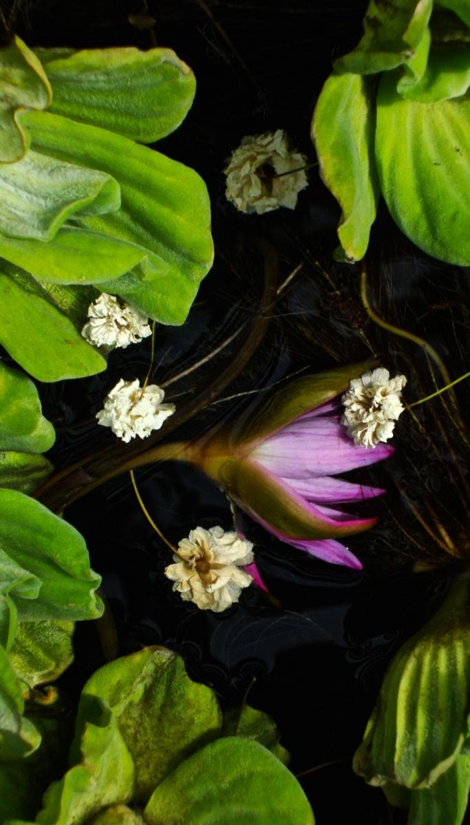 【晓鸣摄影】花卉植物49作展+独创简诗对照谱_图1-12