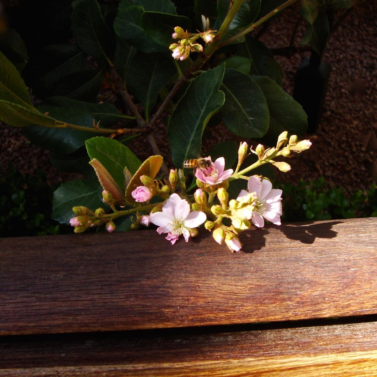 【晓鸣摄影】花卉植物49作展+独创简诗对照谱_图1-9