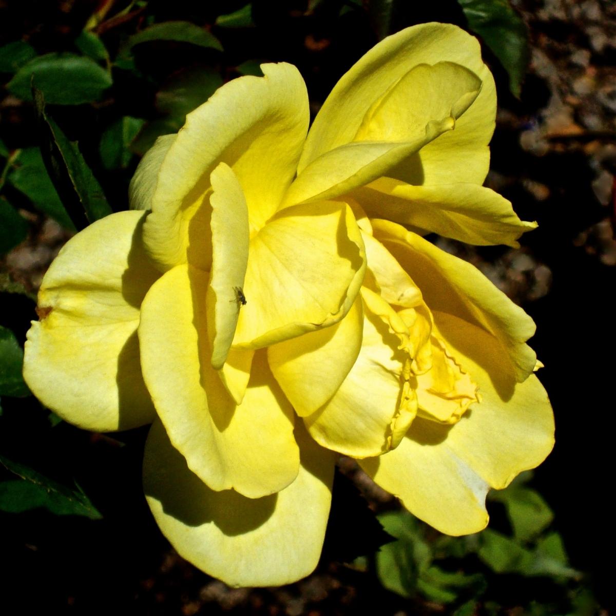 【晓鸣摄影】花卉植物49作展+独创简诗对照谱_图1-15