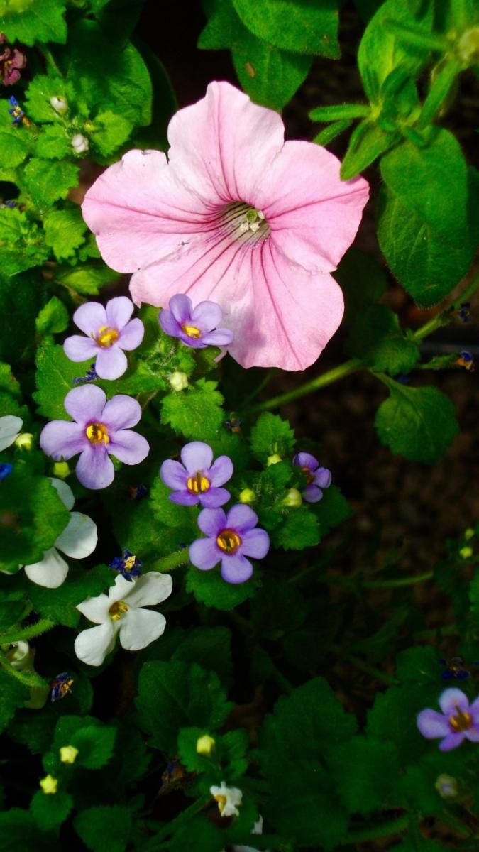 【晓鸣摄影】花卉植物49作展+独创简诗对照谱_图1-14