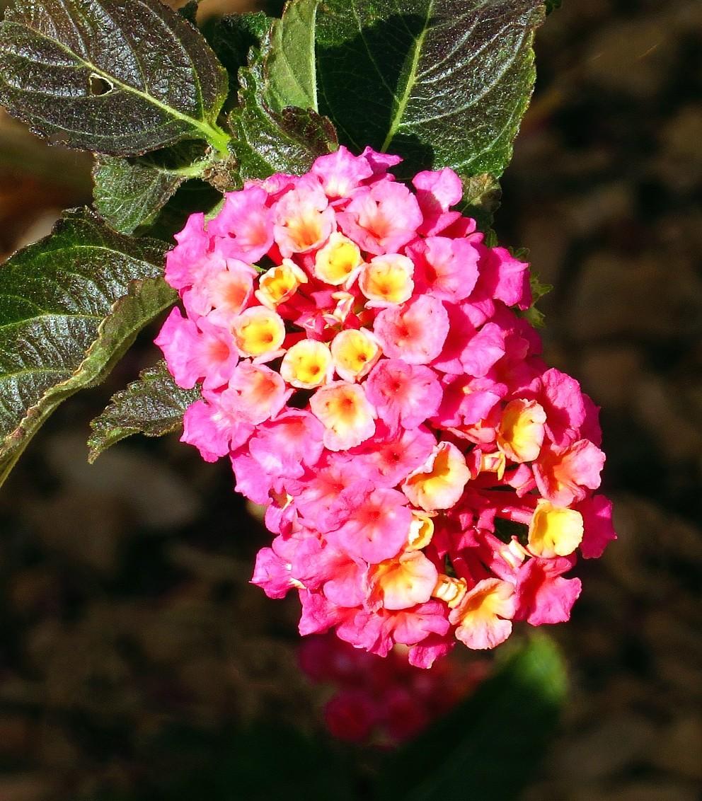 【晓鸣摄影】花卉植物49作展+独创简诗对照谱_图1-16