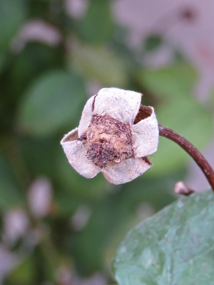 【晓鸣摄影】花卉植物49作展+独创简诗对照谱_图1-43