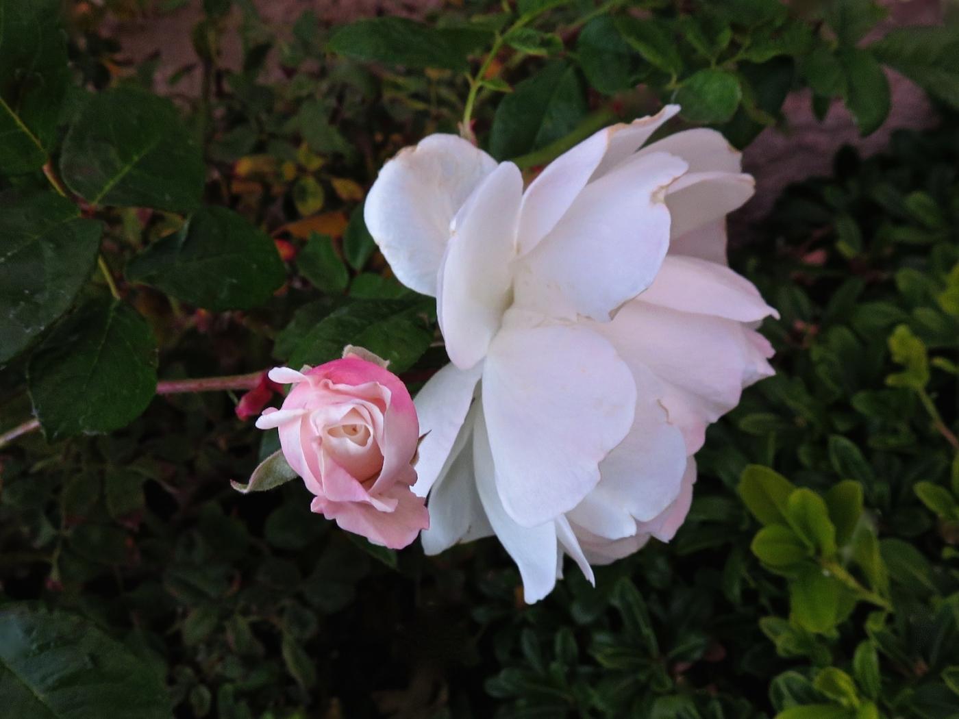 【晓鸣摄影】花卉植物49作展+独创简诗对照谱_图1-18