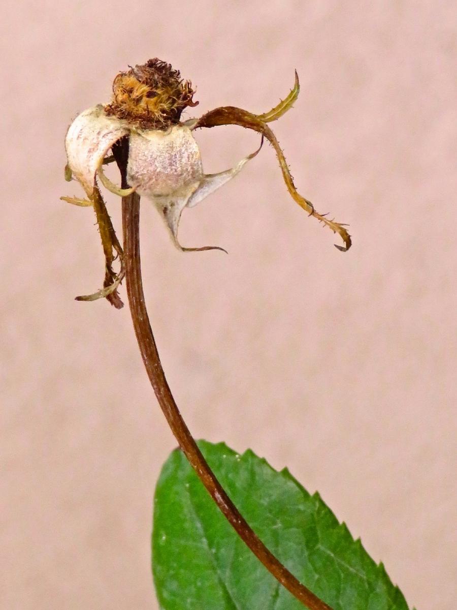 【晓鸣摄影】花卉植物49作展+独创简诗对照谱_图1-19