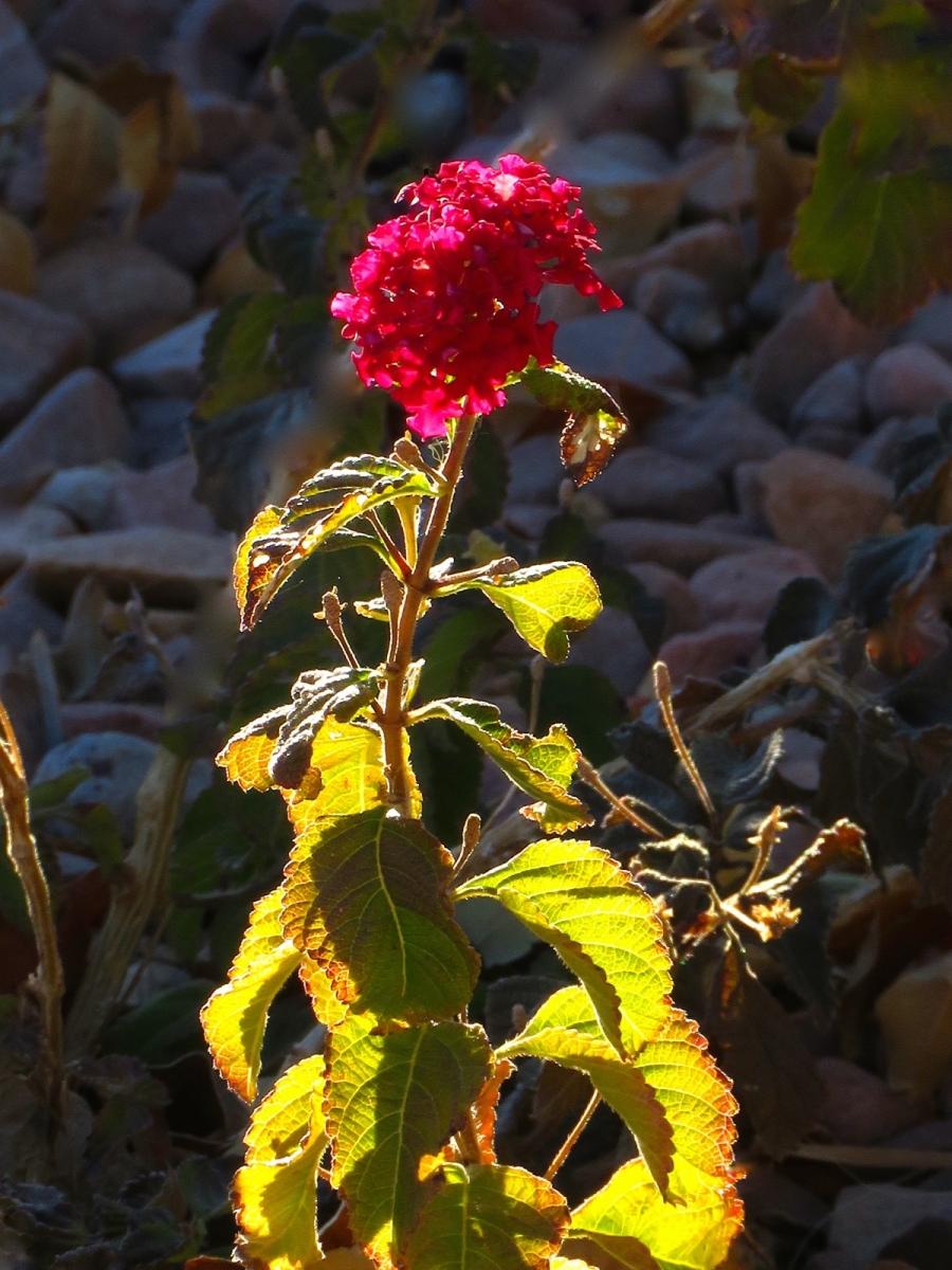 【晓鸣摄影】花卉植物49作展+独创简诗对照谱_图1-21