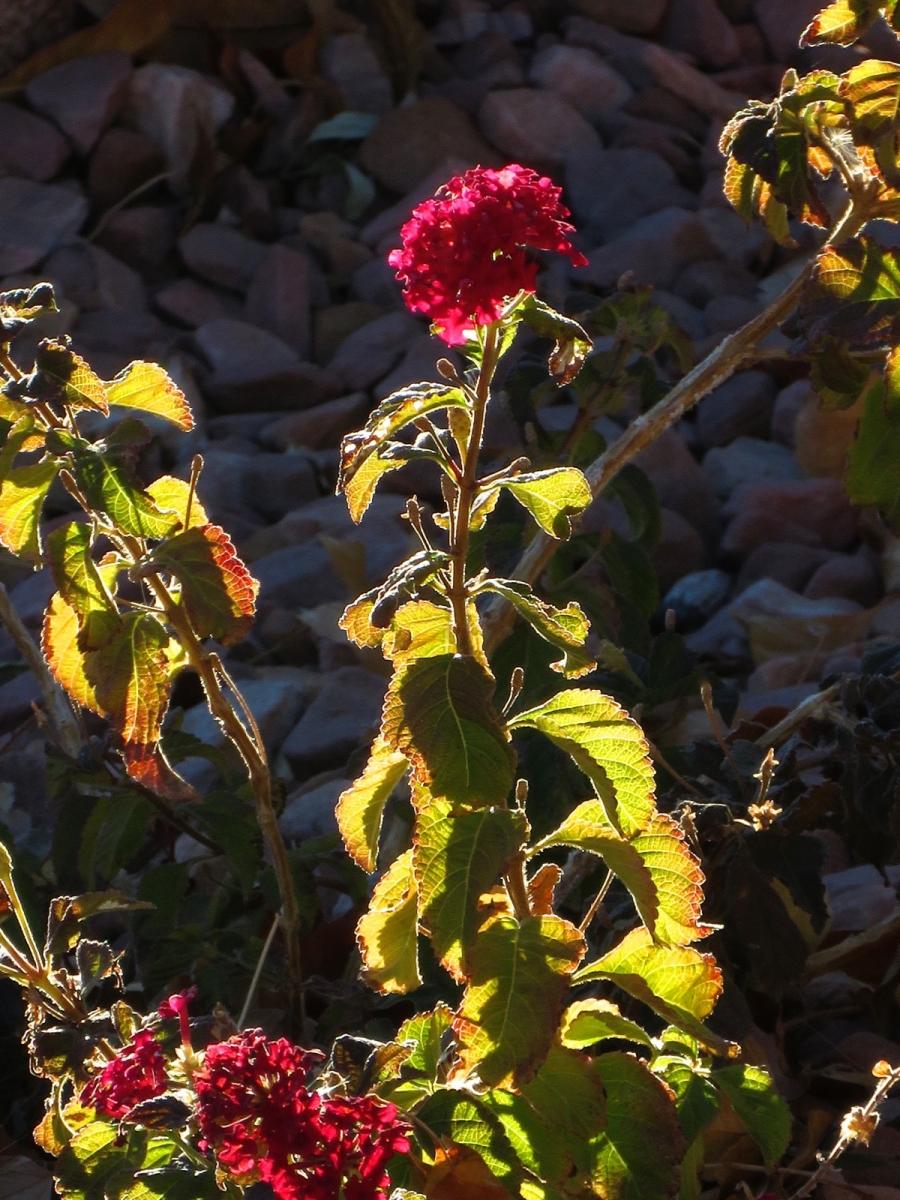 【晓鸣摄影】花卉植物49作展+独创简诗对照谱_图1-25