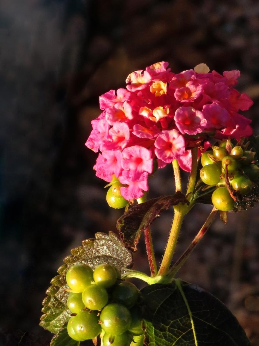 【晓鸣摄影】花卉植物49作展+独创简诗对照谱_图1-27