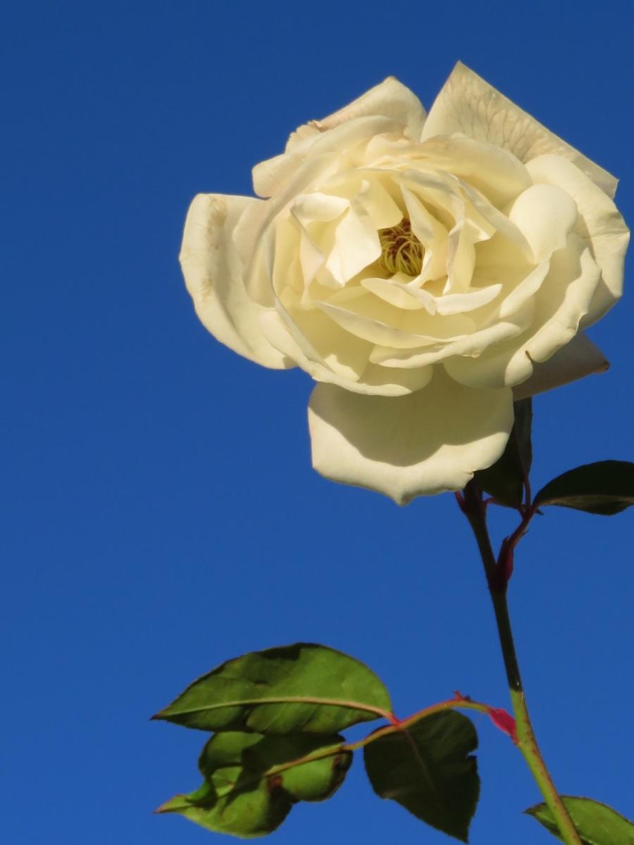 【晓鸣摄影】花卉植物49作展+独创简诗对照谱_图1-28