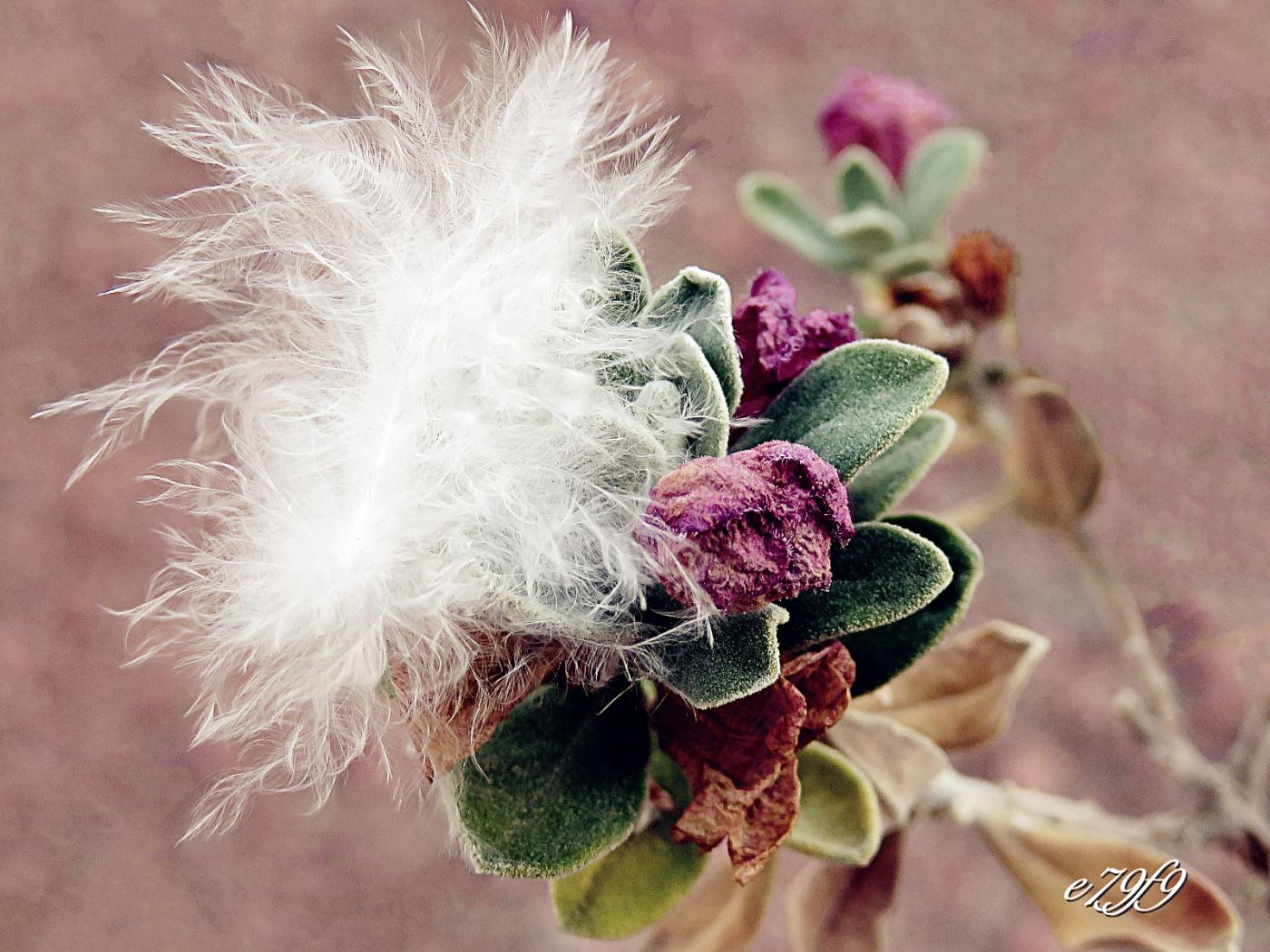 【晓鸣摄影】花卉植物49作展+独创简诗对照谱_图1-29