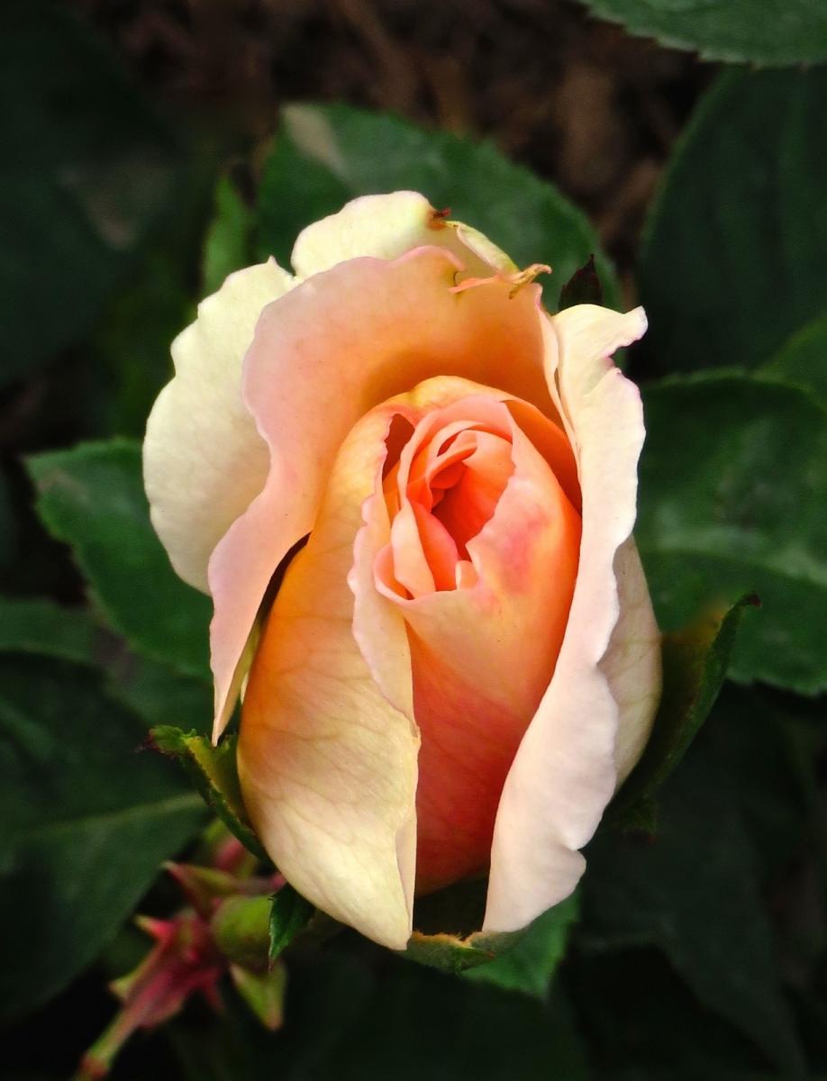 【晓鸣摄影】花卉植物49作展+独创简诗对照谱_图1-30