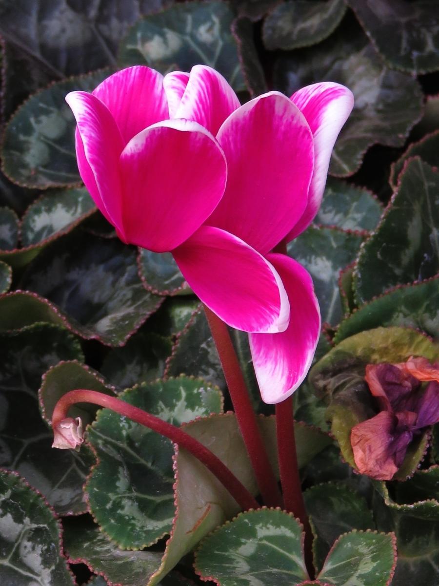 【晓鸣摄影】花卉植物49作展+独创简诗对照谱_图1-32