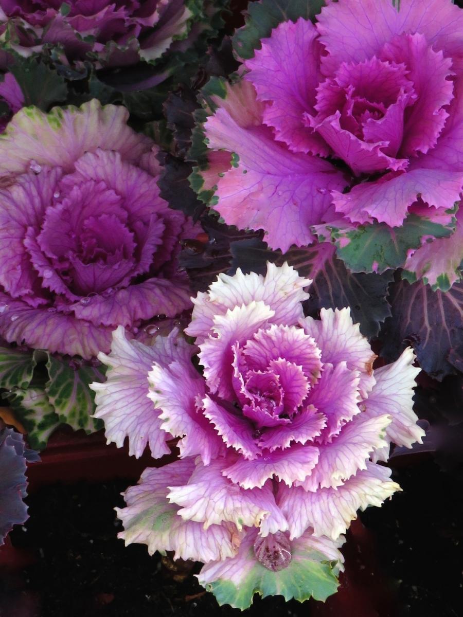 【晓鸣摄影】花卉植物49作展+独创简诗对照谱_图1-34