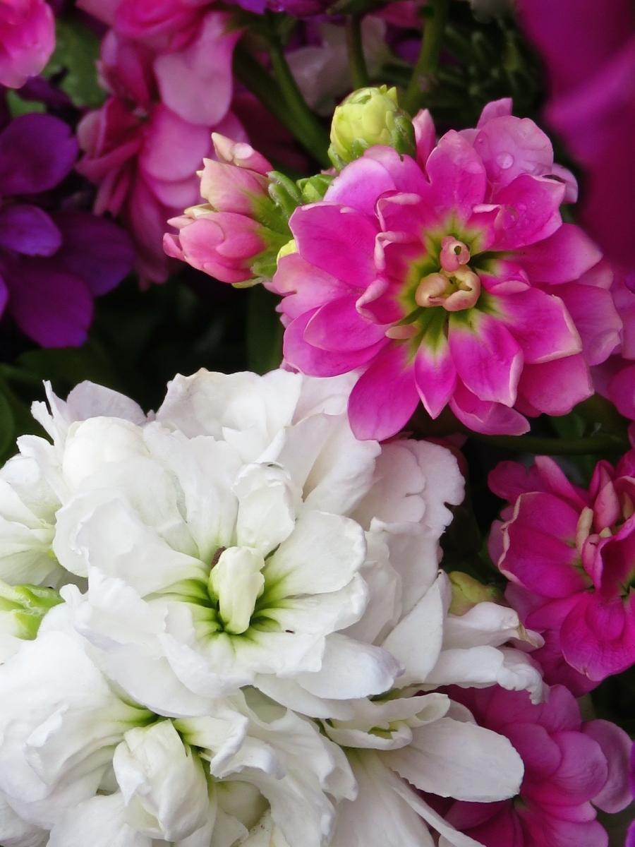 【晓鸣摄影】花卉植物49作展+独创简诗对照谱_图1-37