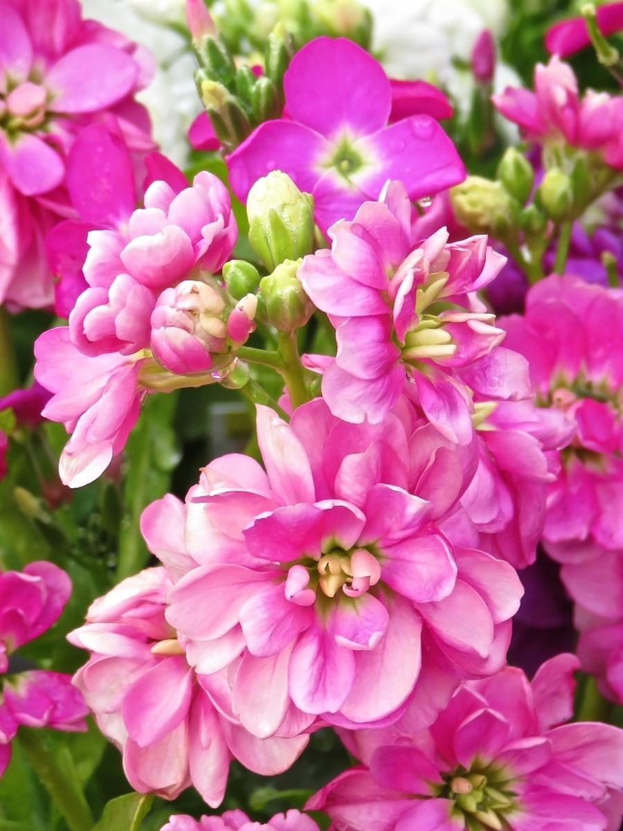 【晓鸣摄影】花卉植物49作展+独创简诗对照谱_图1-36