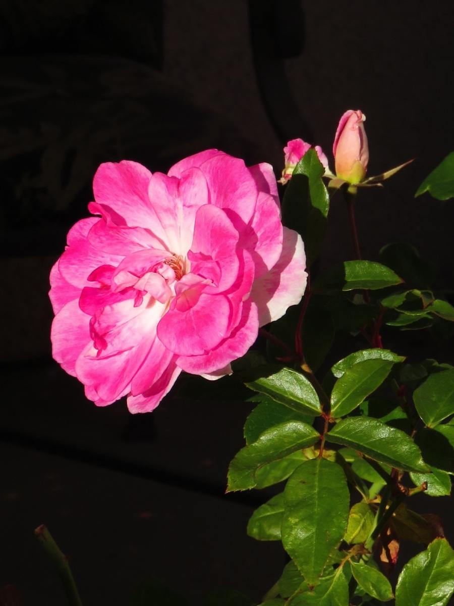 【晓鸣摄影】花卉植物49作展+独创简诗对照谱_图1-38