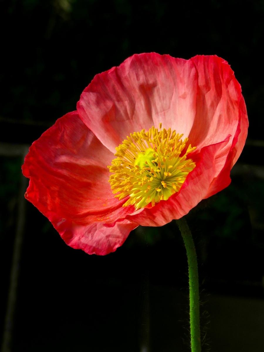 【晓鸣摄影】花卉植物49作展+独创简诗对照谱_图1-41