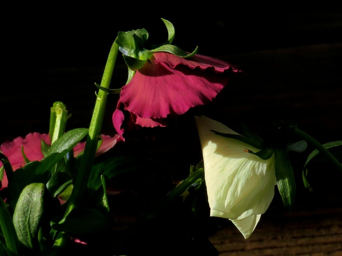 【晓鸣摄影】花卉植物49作展+独创简诗对照谱_图1-40