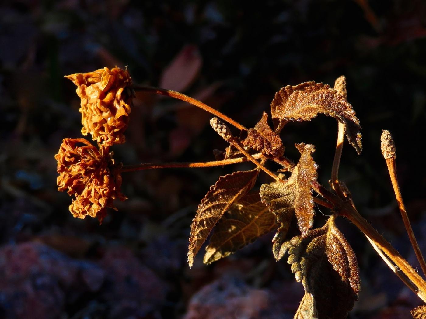 【晓鸣摄影】花卉植物49作展+独创简诗对照谱_图1-45