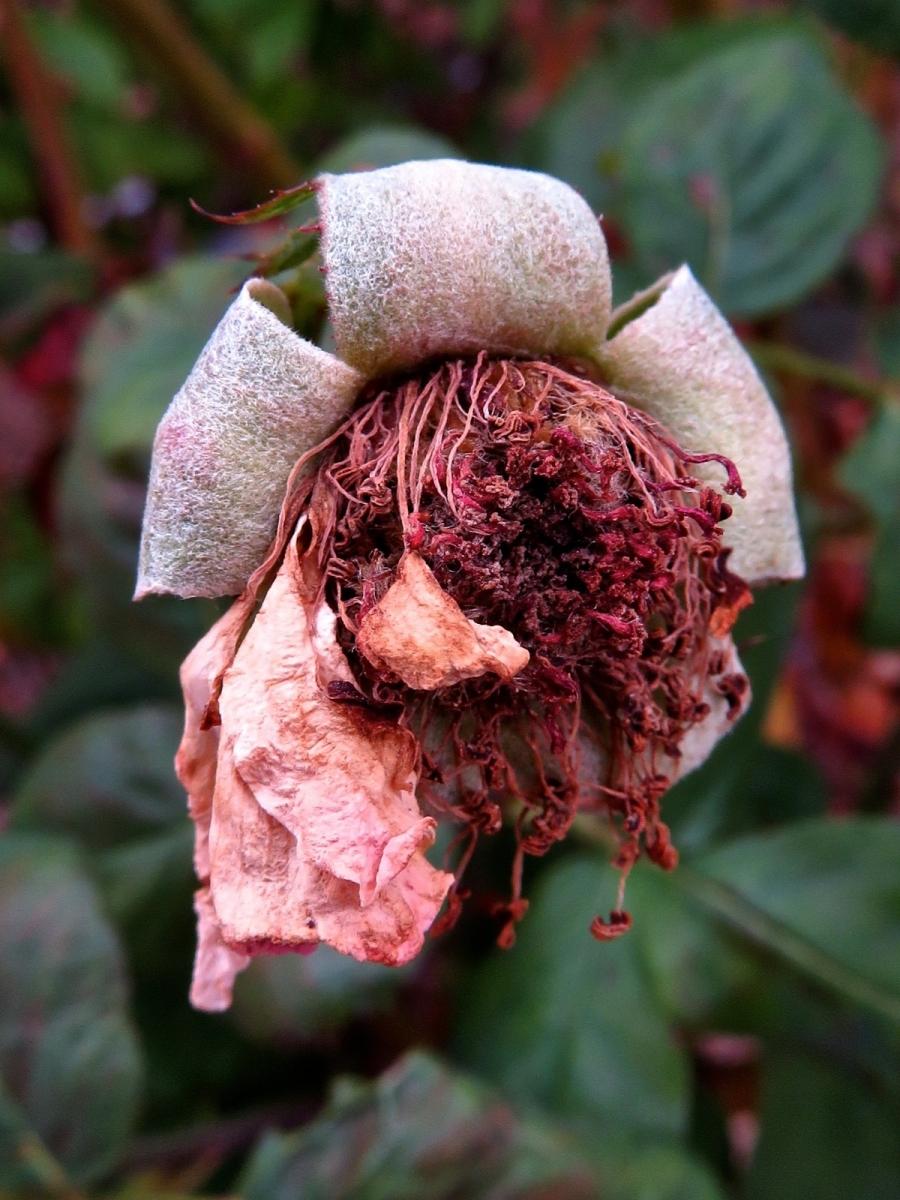 【晓鸣摄影】花卉植物49作展+独创简诗对照谱_图1-46