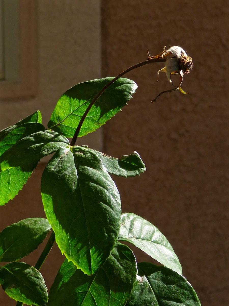 【晓鸣摄影】花卉植物49作展+独创简诗对照谱_图1-47