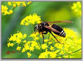 微距试拍夏日昆虫