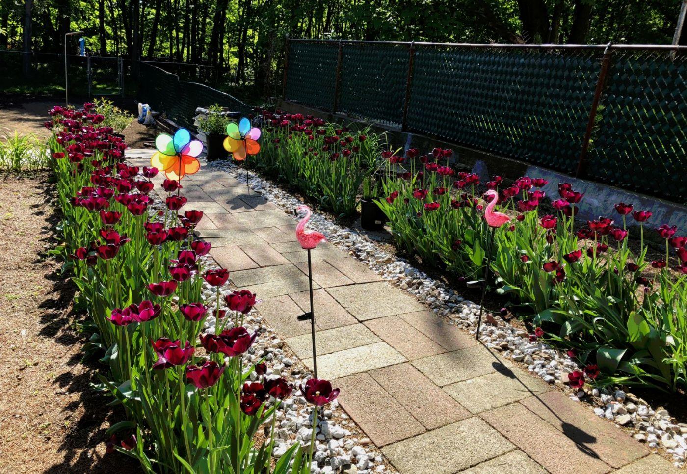 【田螺手机摄影】我后院的紫金香也全部开了_图1-1