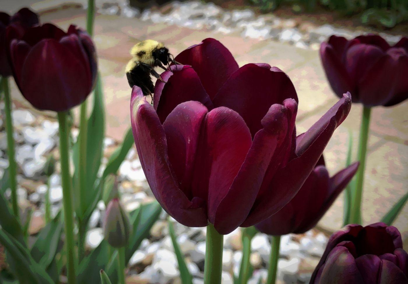 【田螺手机摄影】我后院的紫金香也全部开了_图1-7