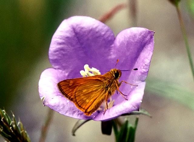 大弄蝶之爱_图1-8
