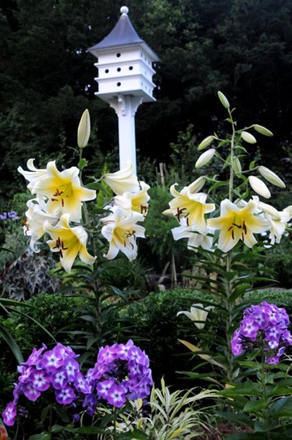 塔山植物园漫步 3_图1-12